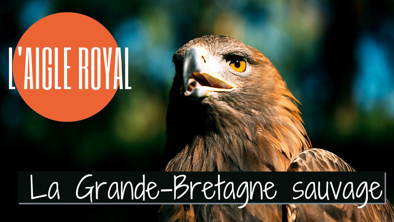 La Grande-Bretagne sauvage : l'Aigle Royal