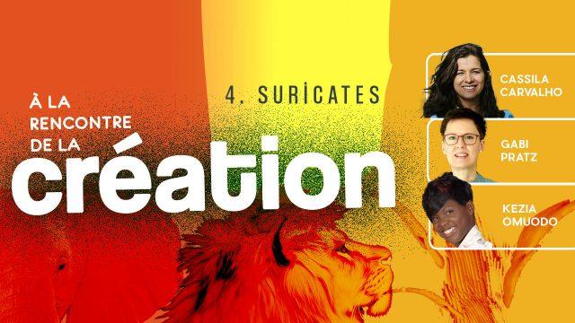 À la rencontre de la Création #4 - Suricates