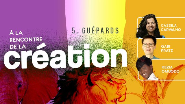 À la rencontre de la Création #5 - Guépards